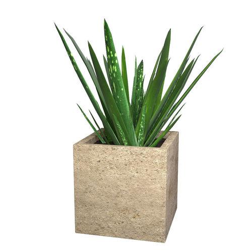 aloe vera - potted plant 3d model obj mtl 3ds fbx dae 1