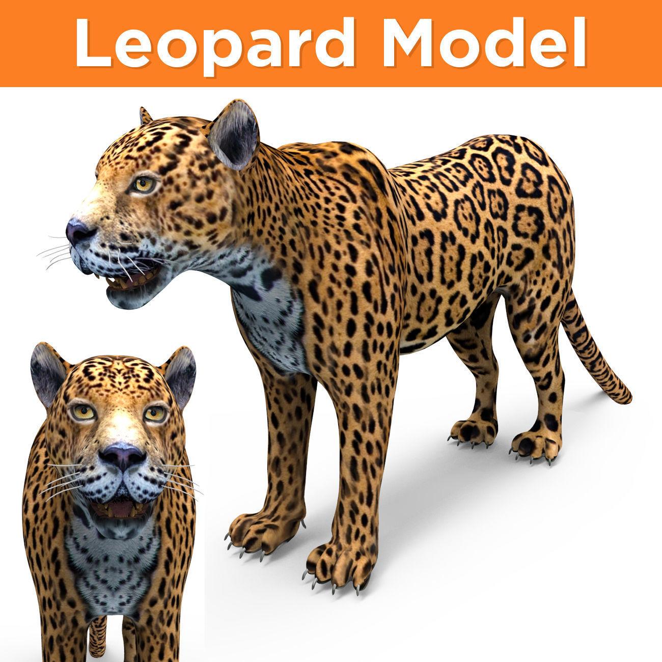 3D  Leopard low poly model