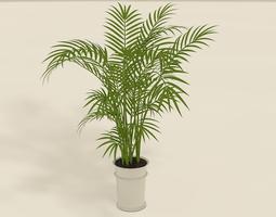 pot-plant Areca Palm plant pot 3D
