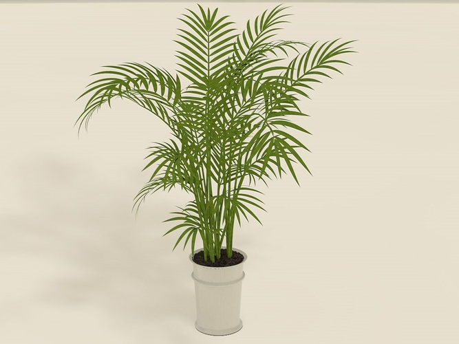 Areca Palm Plant Pot Model S Fbx C4d 1