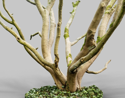 realistic 3d scanned tree reference game-ready