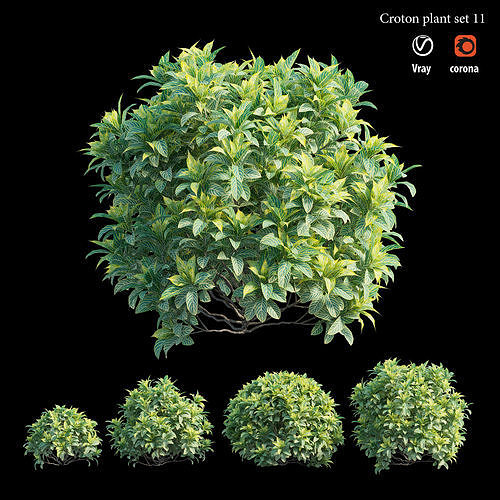 Croton plant set 11