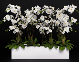Orchid Arrangement 3 3D
