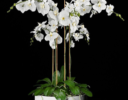 Orchid Arrangement 4 3D
