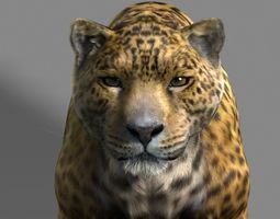 3d leopard a animated