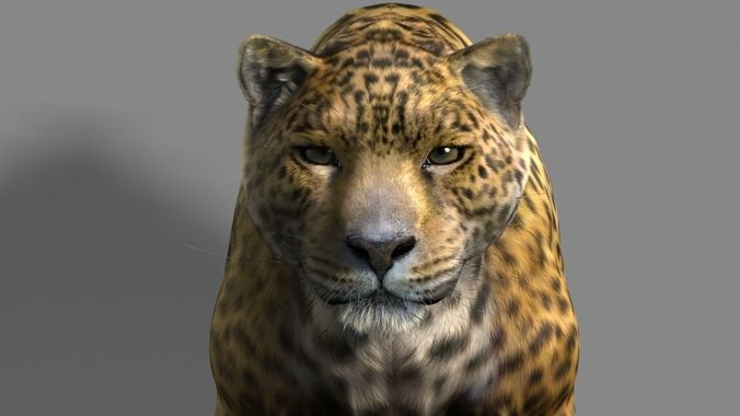 leopard a 3d model rigged animated  1