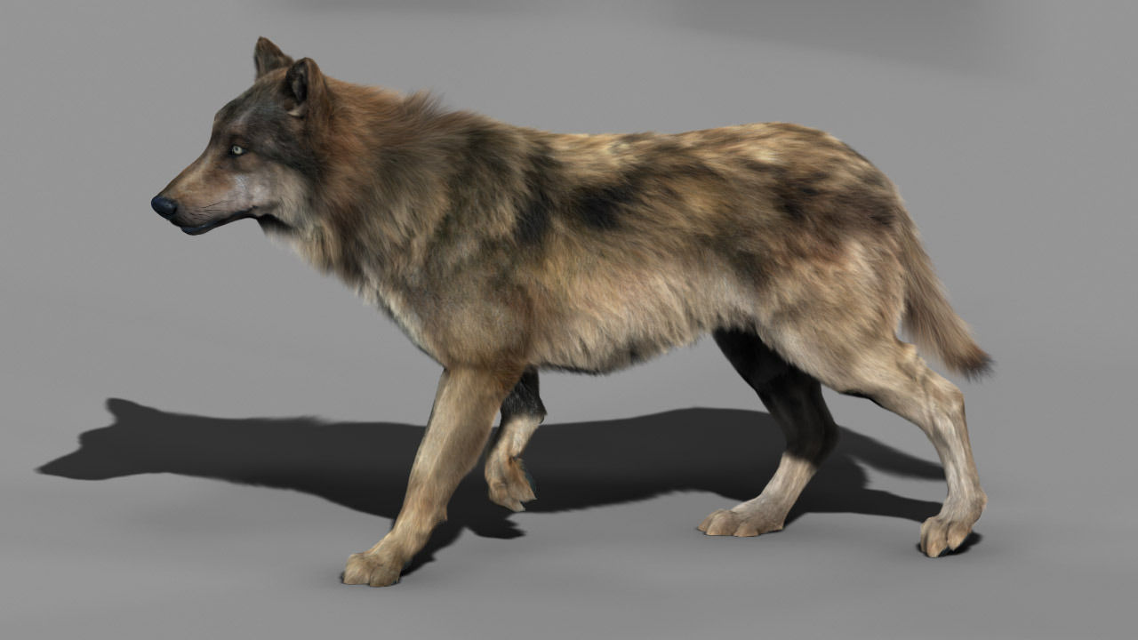 Wolf High Detailed