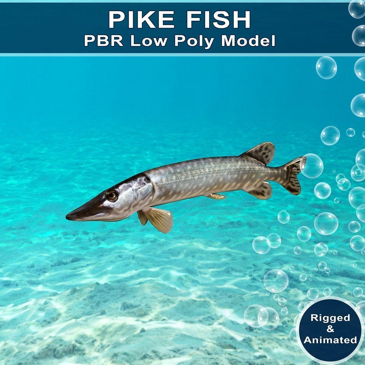 Pike Fish Animated Model