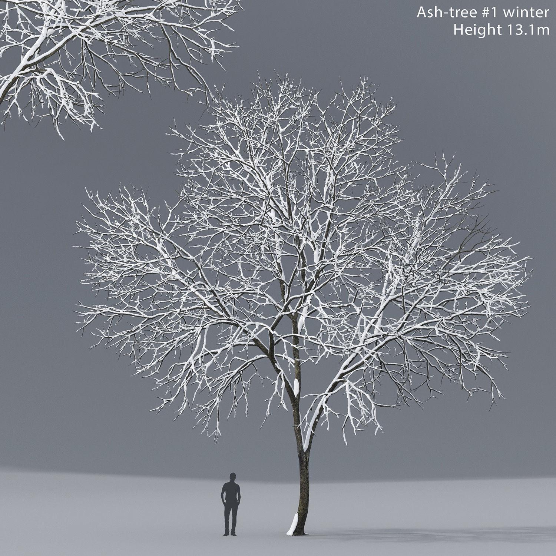 Ash-tree 01 winter