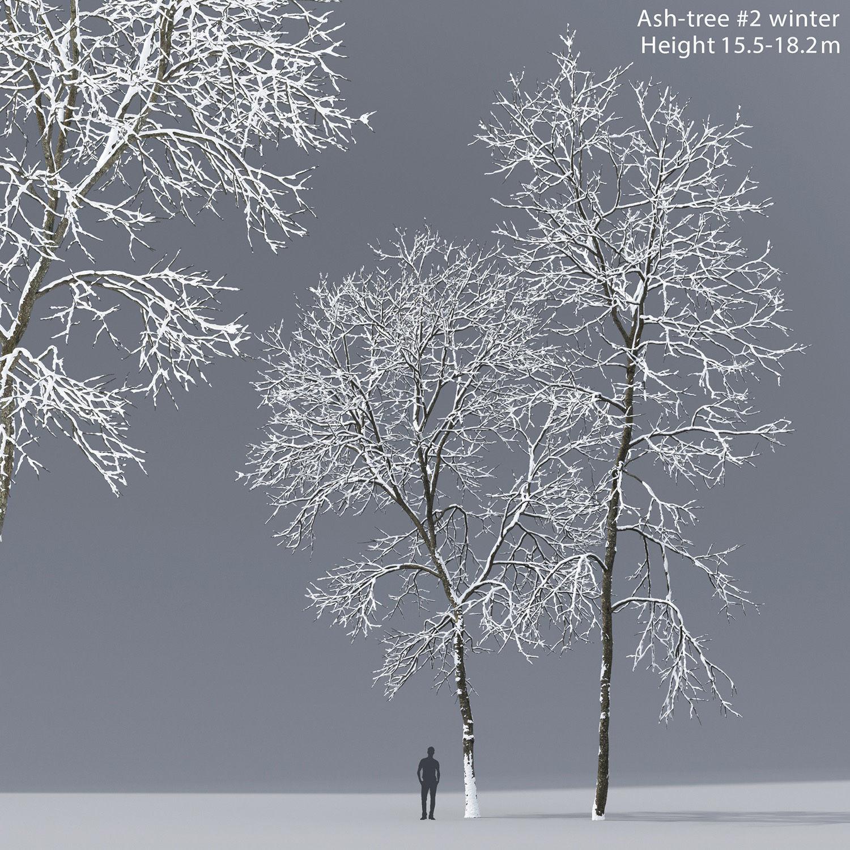 Ash-tree 02 winter H15 18m