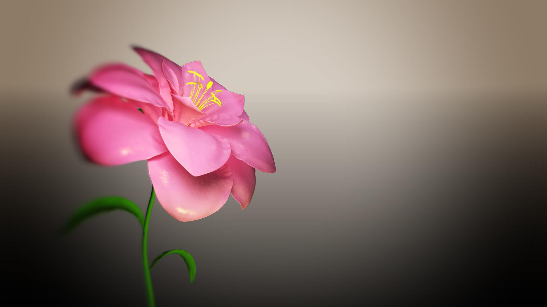 Animated Flower Blooming Flower