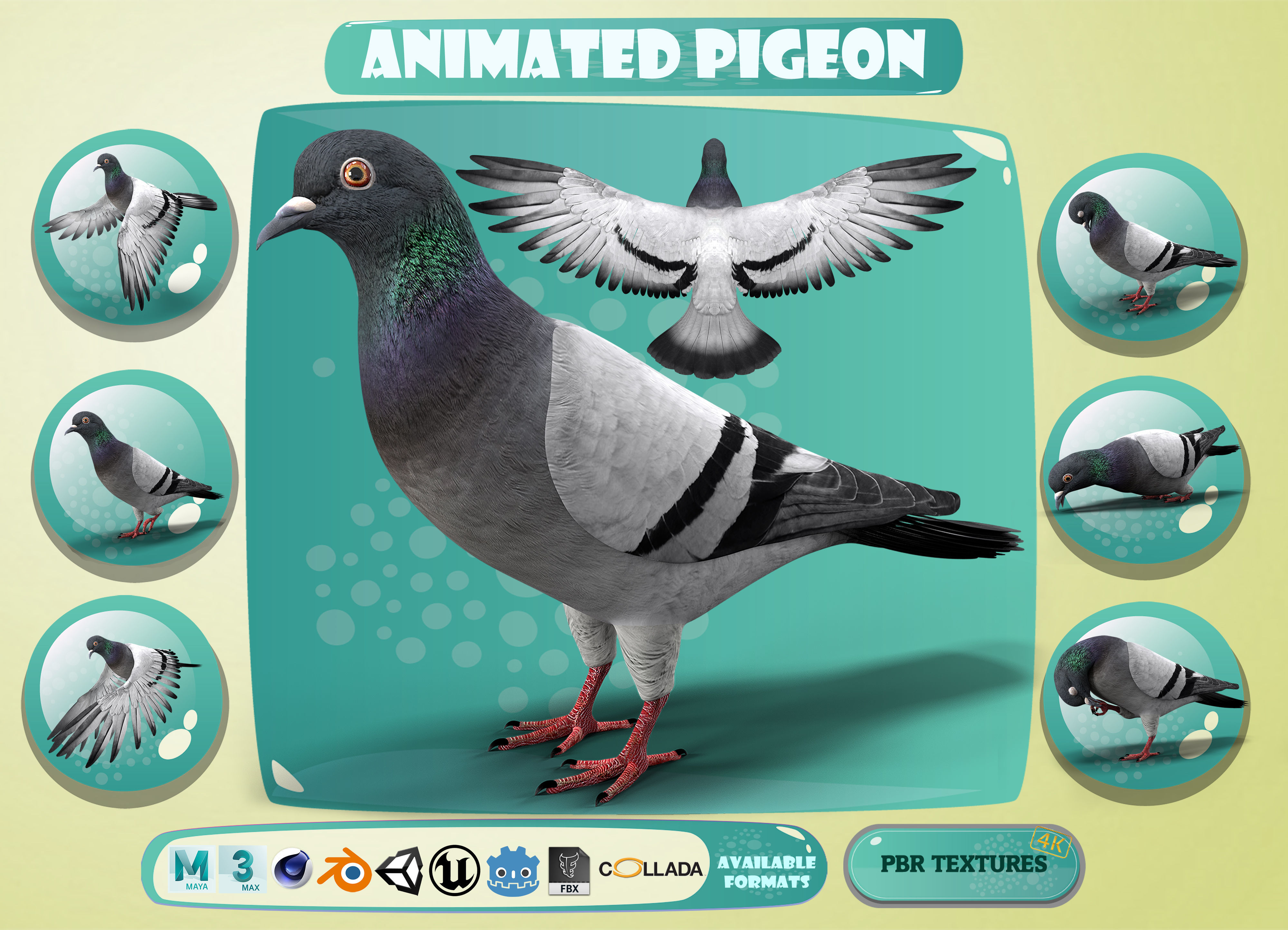 Realistic Animated Rock Pigeon