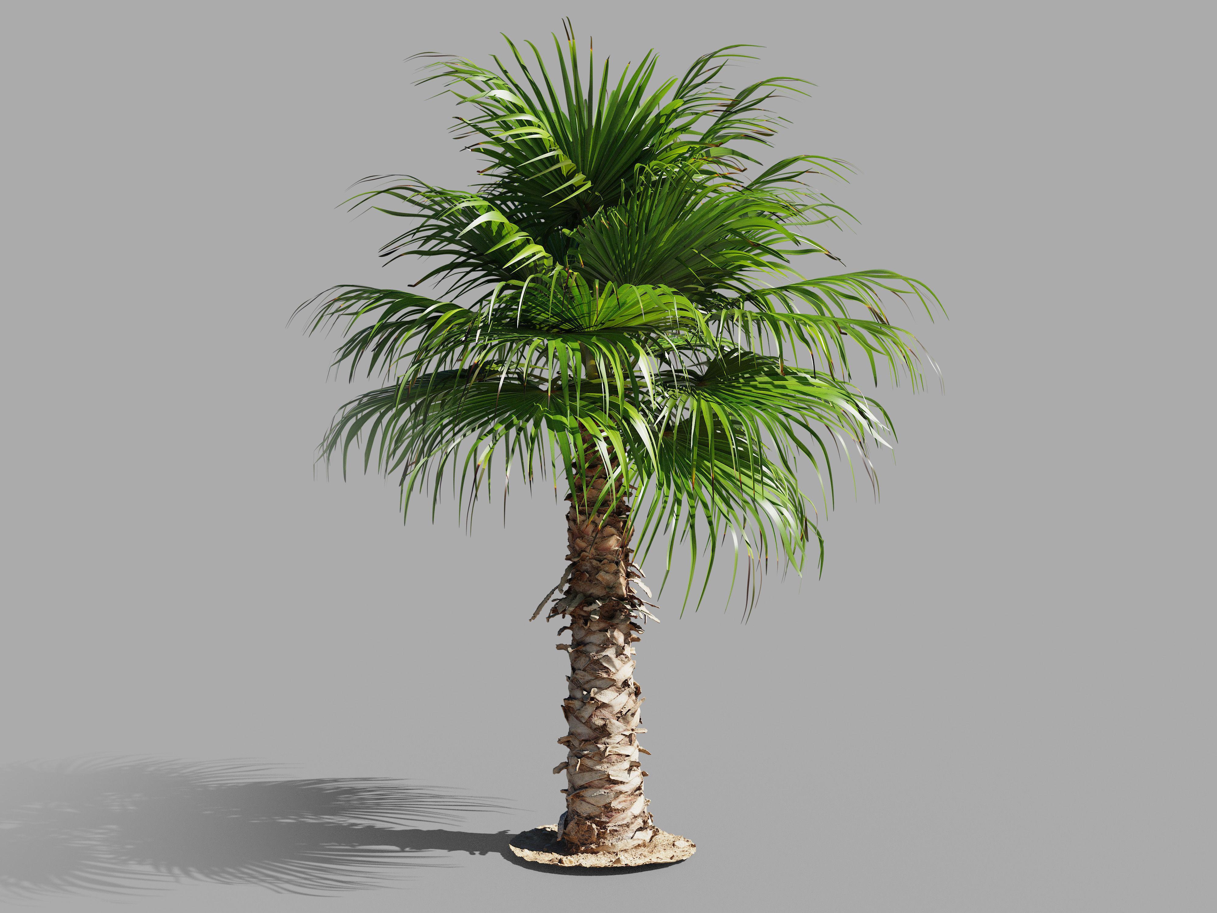 Palm tree - photoscan 03