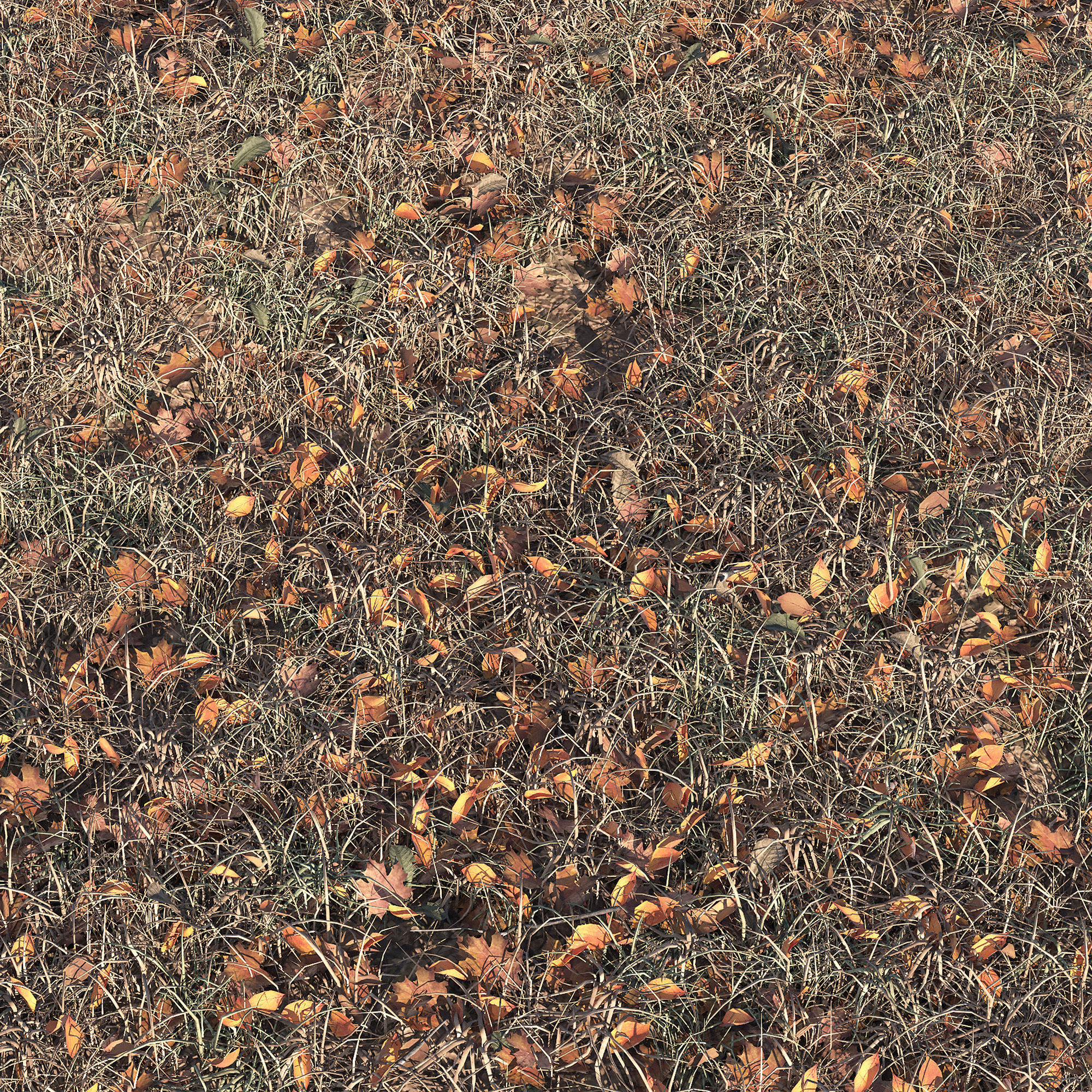 Autumn grass with leaves