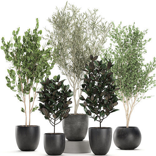 Trees in a black pot for the interior 701