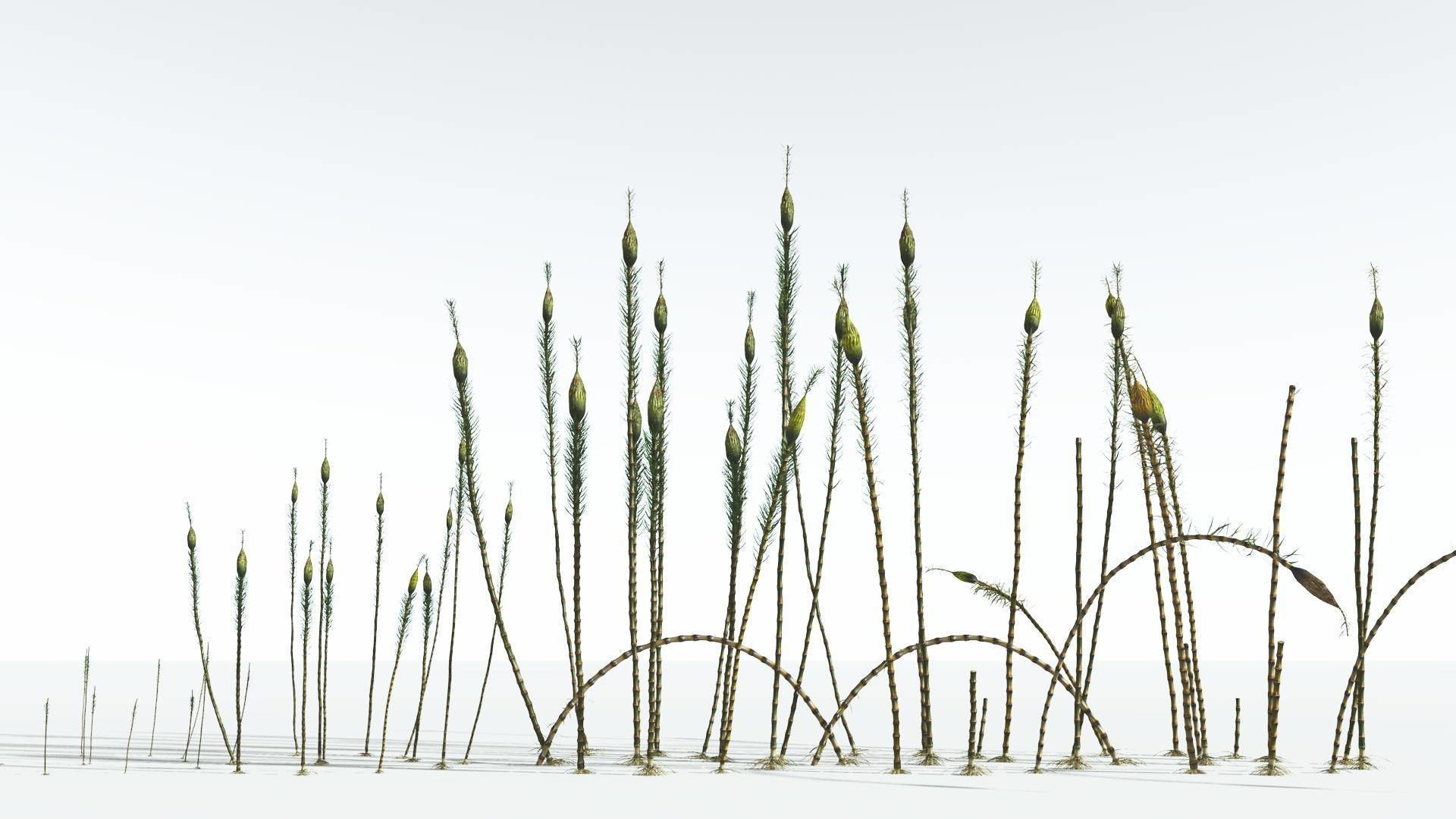 EVERYPlant Suckows Horsetail Tree EXT --24 Models--