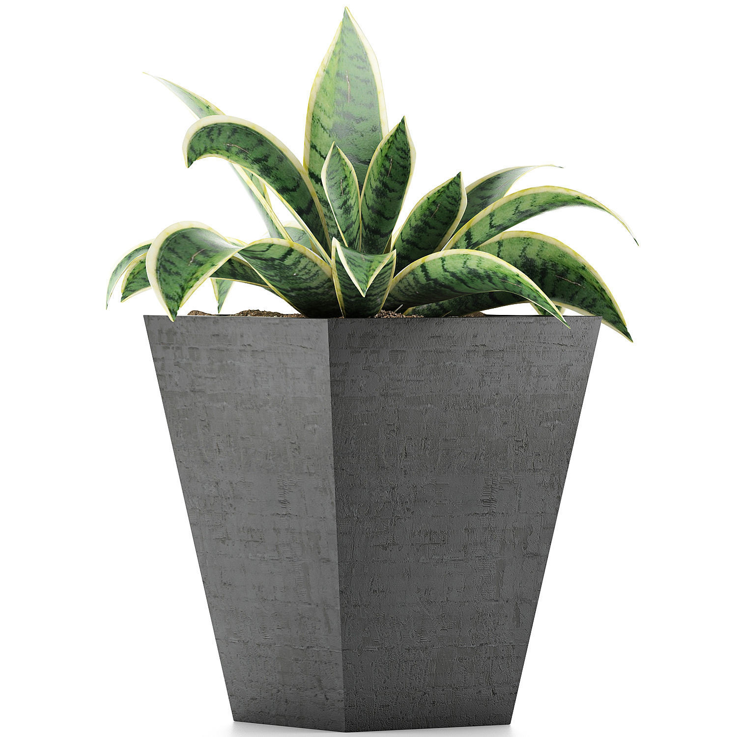 Plants Collection 60