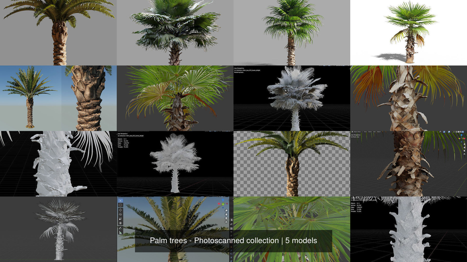 Palm trees - Photoscanned collection