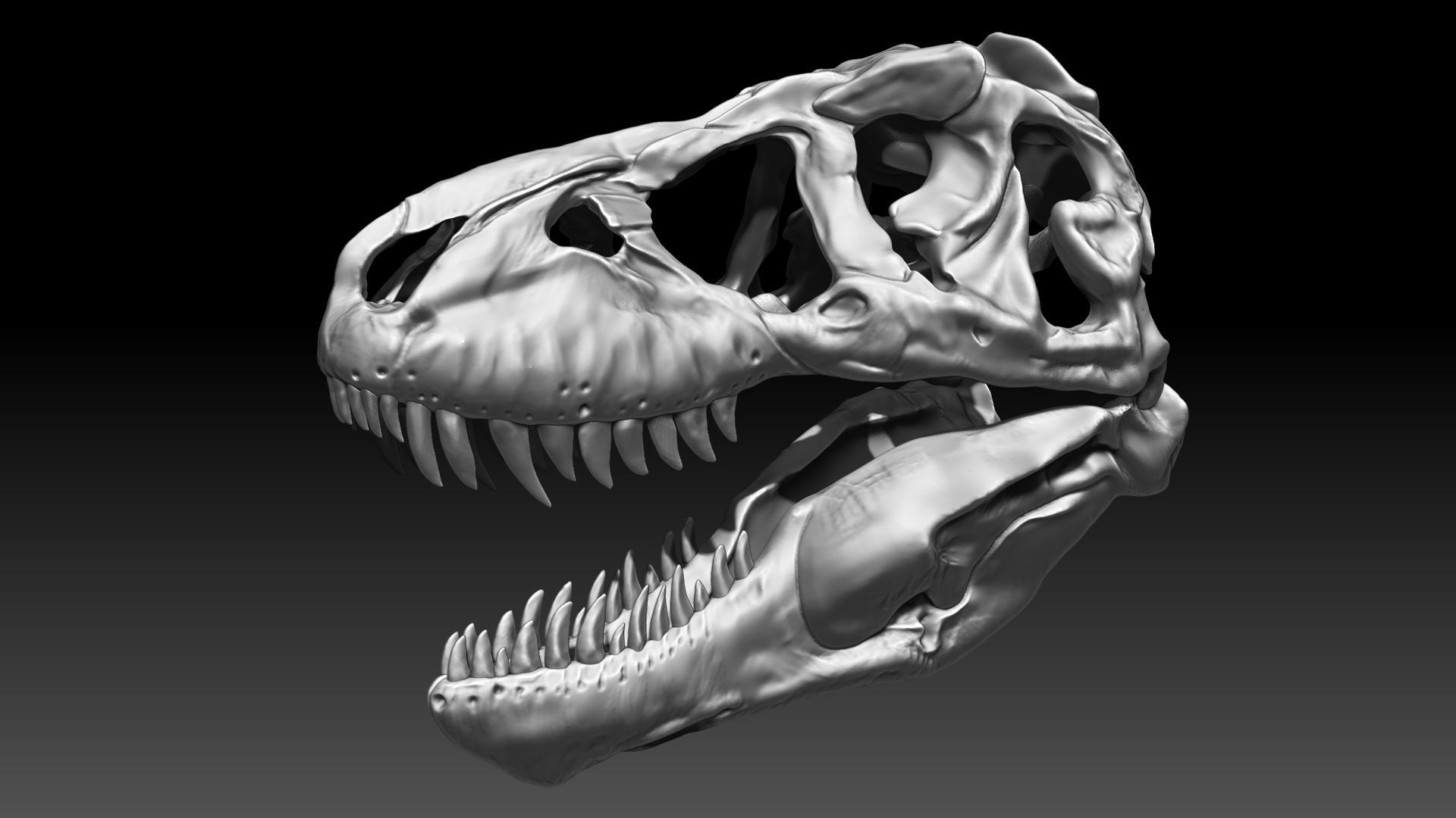 Tyrannosaurus Rex SUE Skull Set