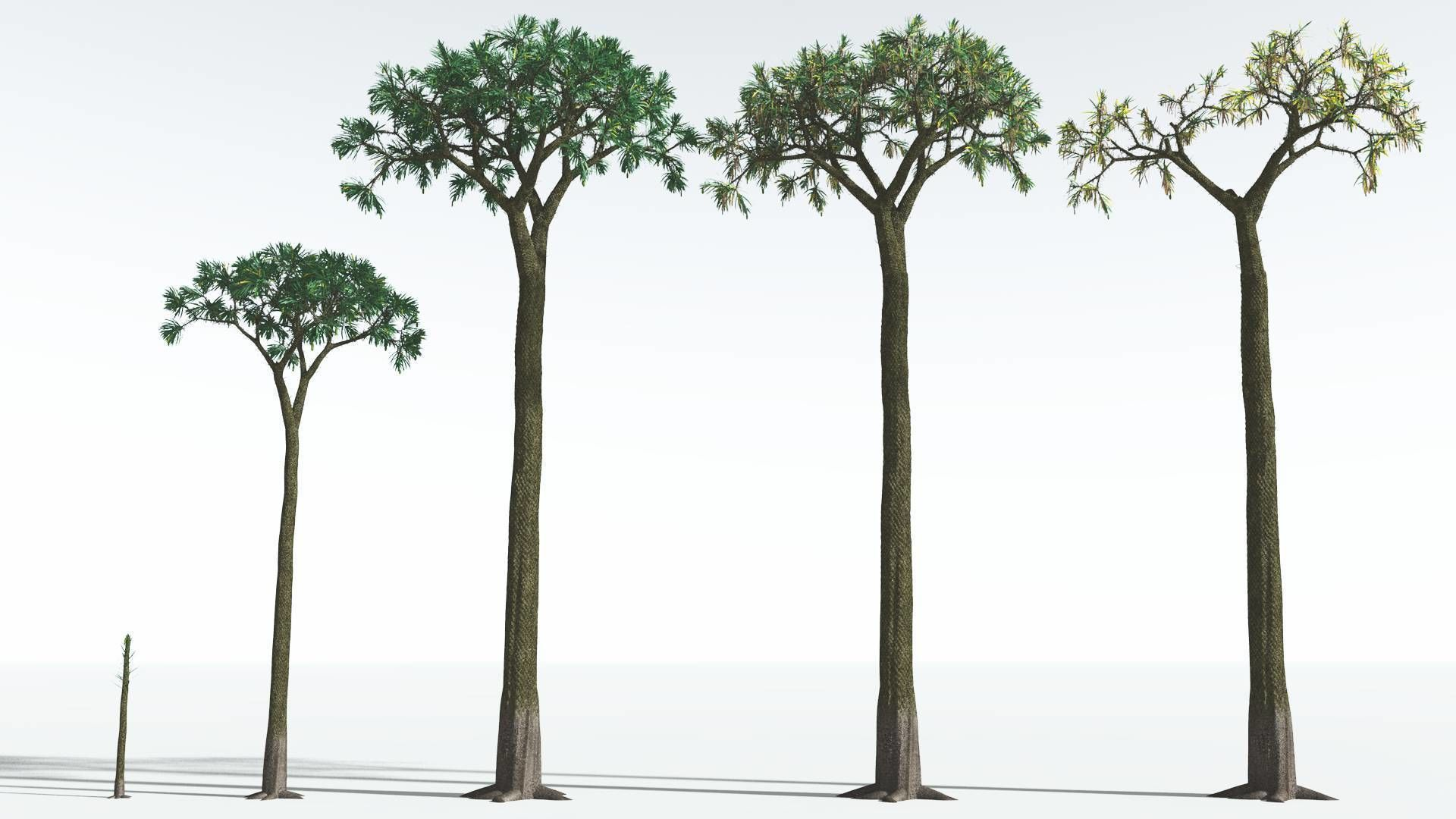EVERYPlant Spiny Scale Tree EXT --24 Models--