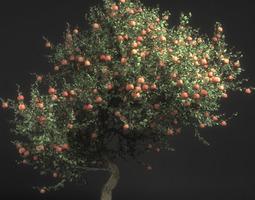 pirus malus apple tree 3d model