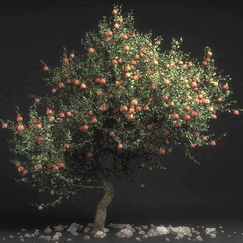 pirus malus apple tree 3d model max obj fbx dae mtl tga 1