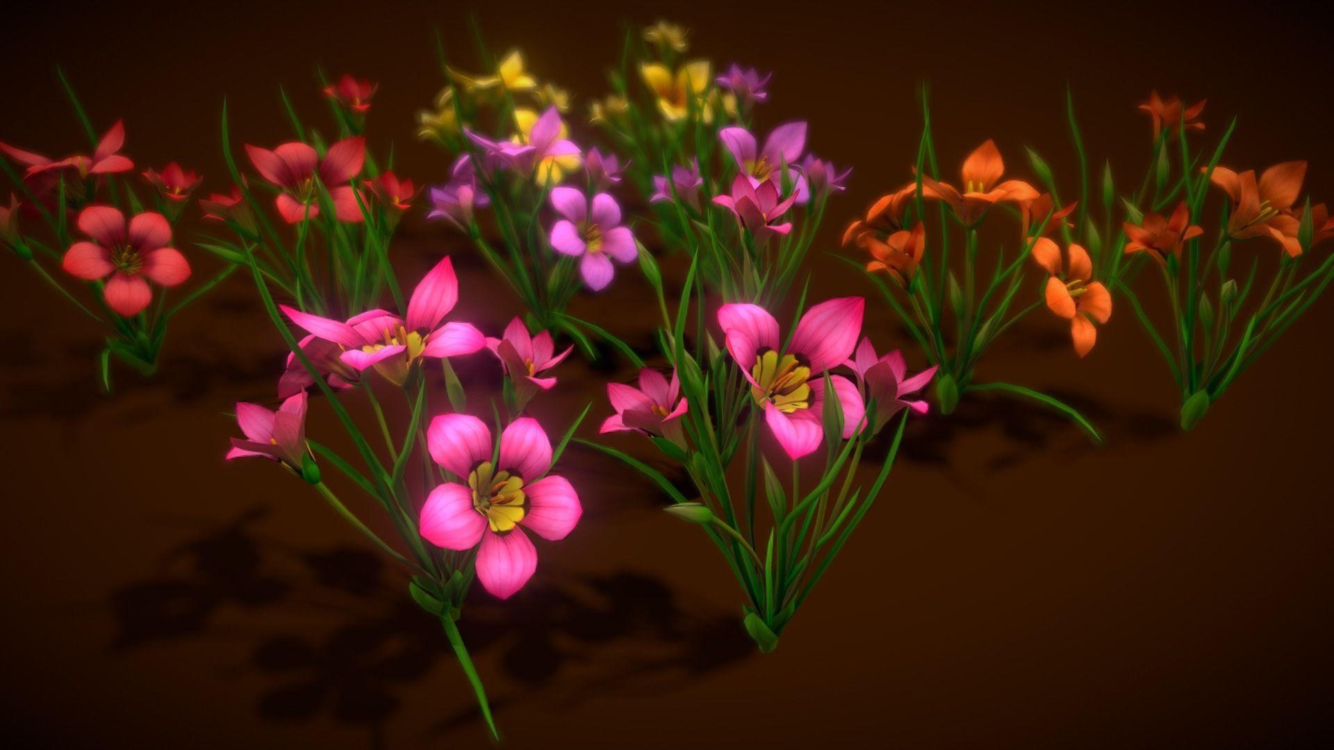 Flower Romulea Subfistulosa