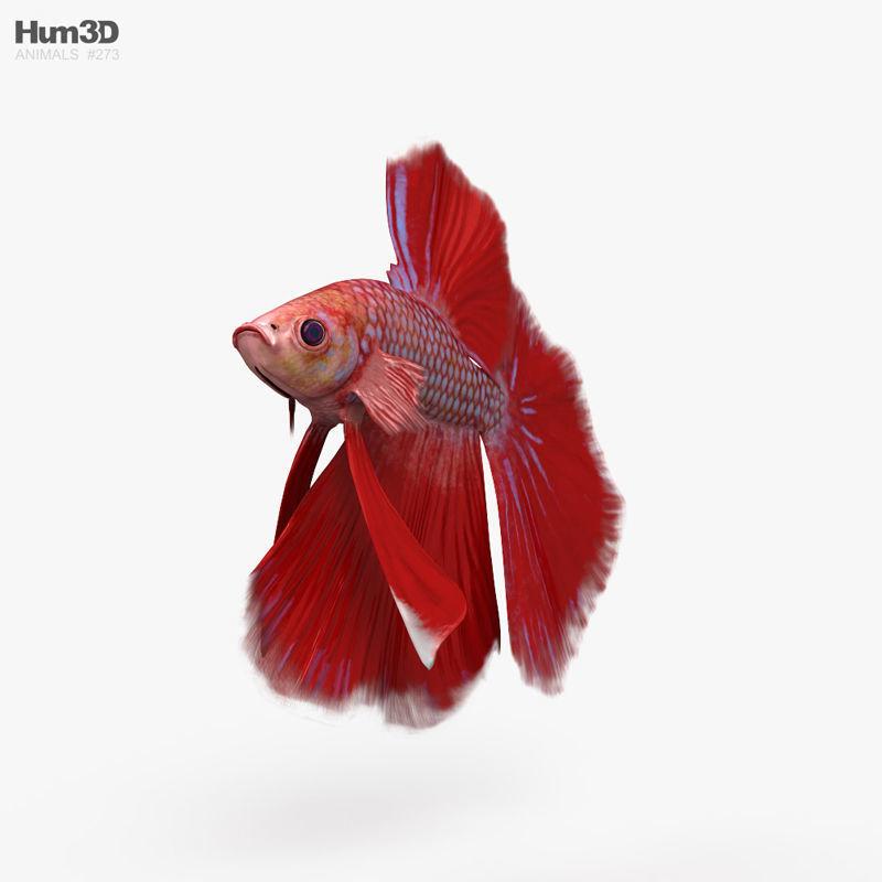 Betta Fish HD