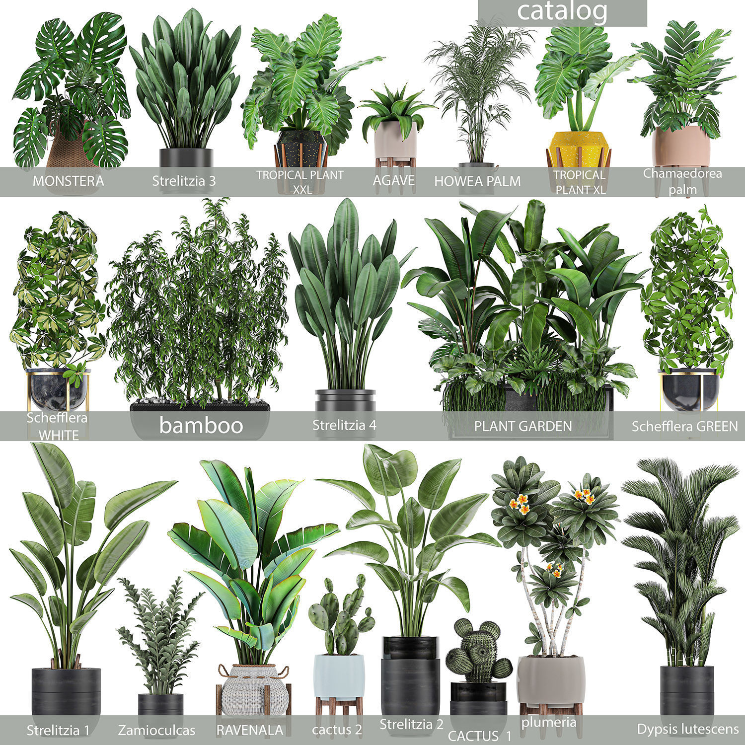 Collection of plants of 20 pieces SET 3