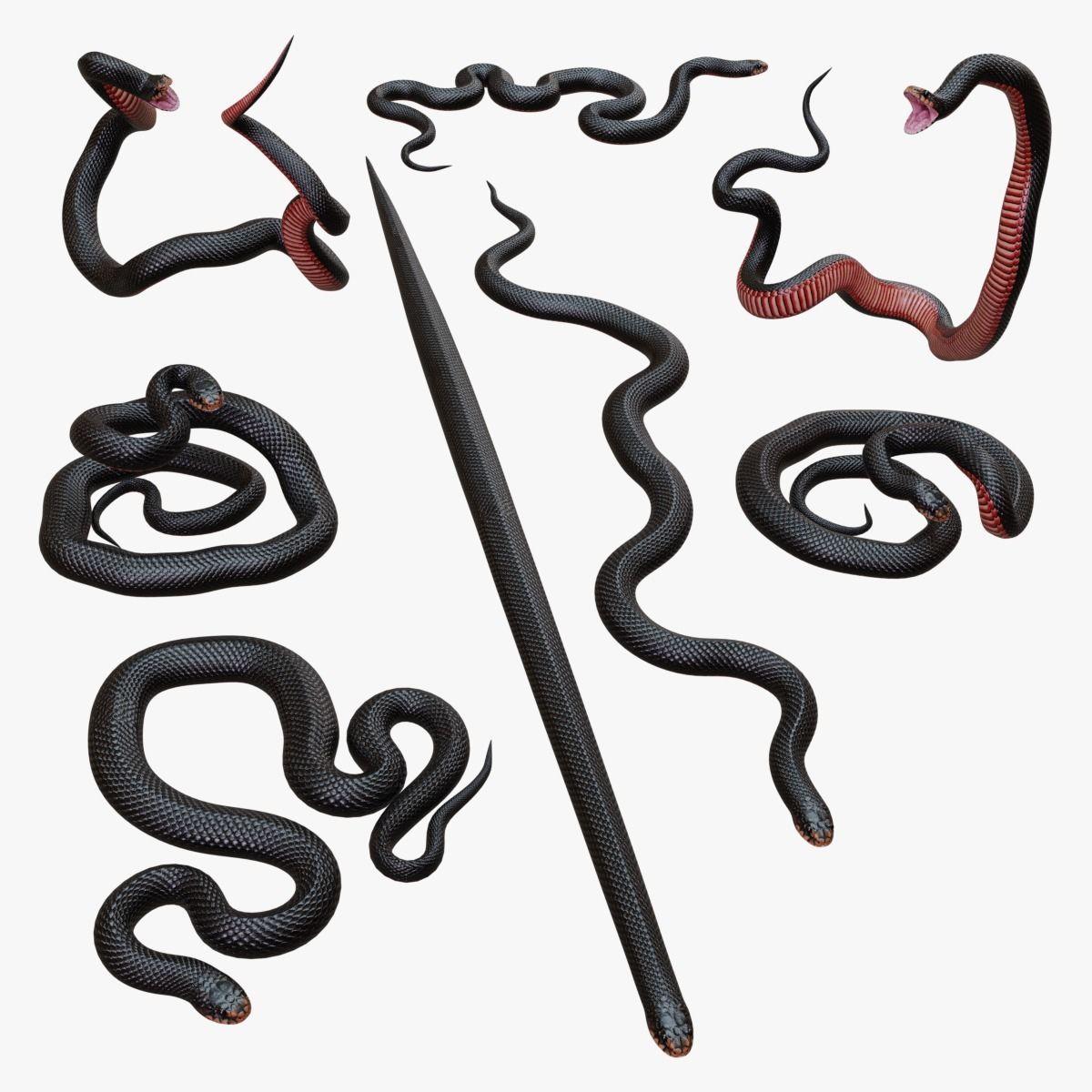 Red Bellied Black Snake - 3D Mesh