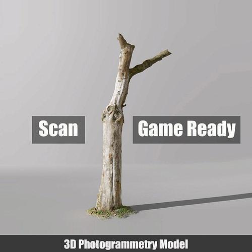 Tree dead 02 Scan