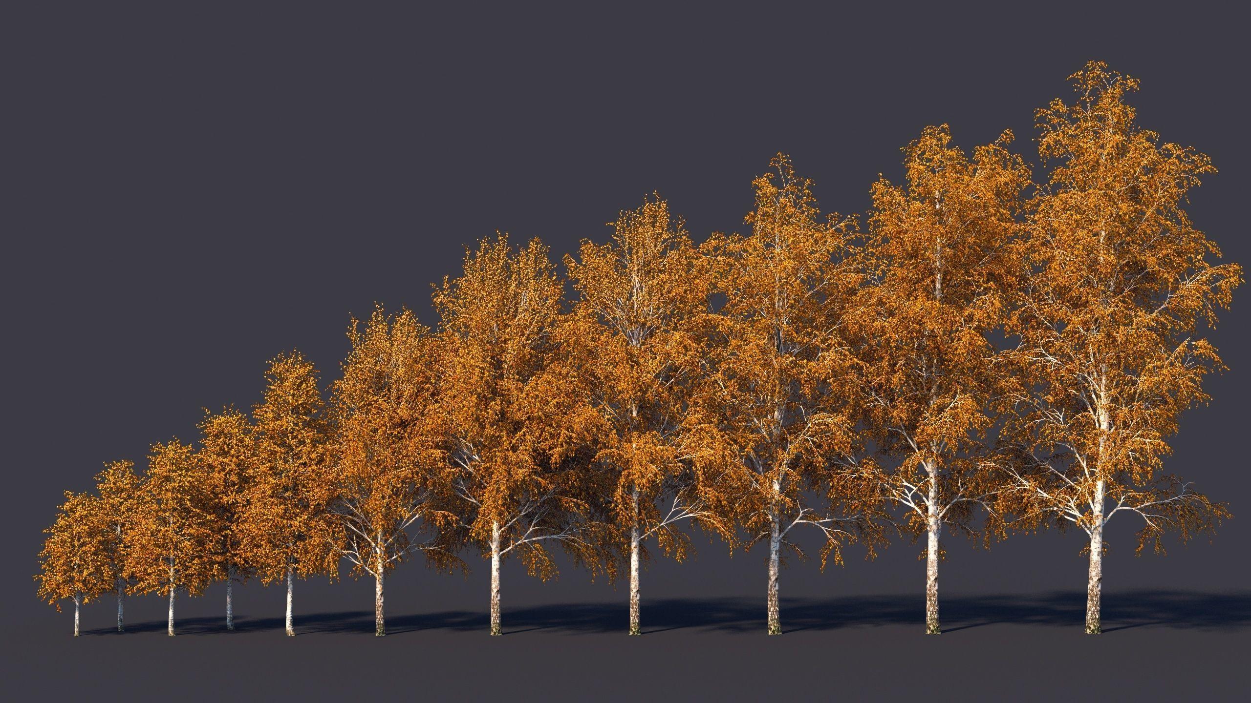 Autumn and summer birches