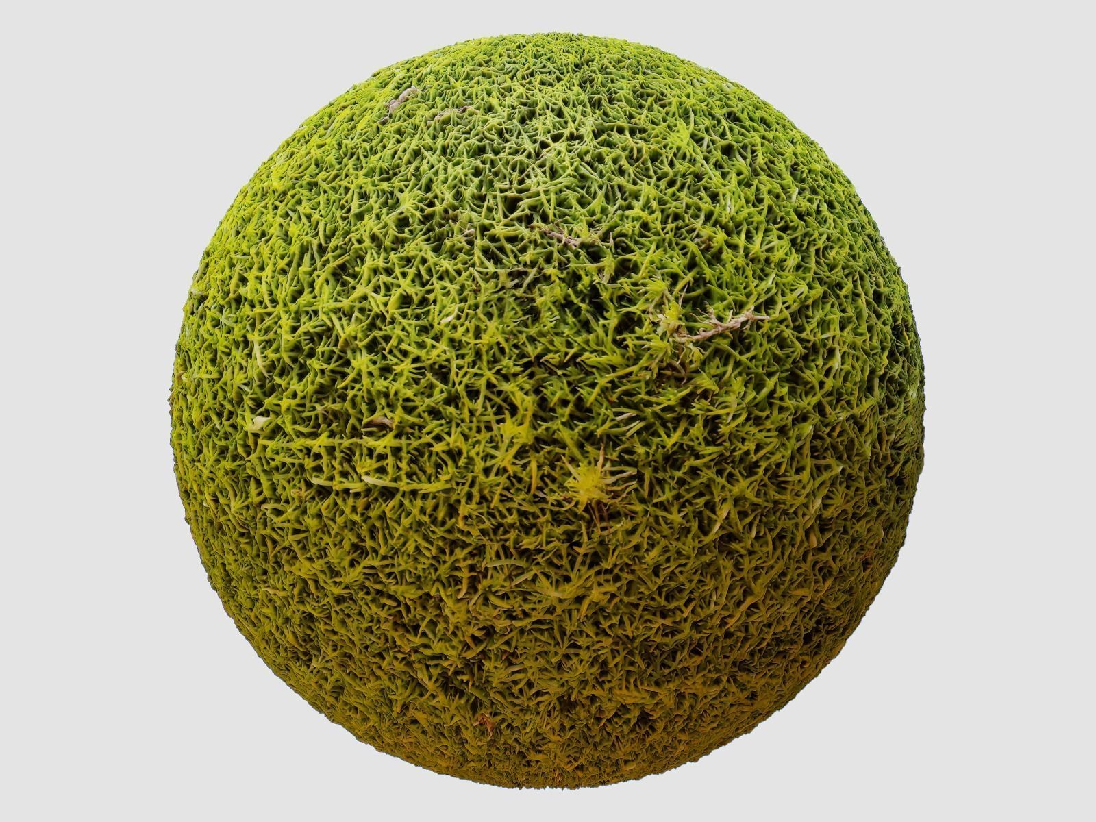 Moss PBR Texture