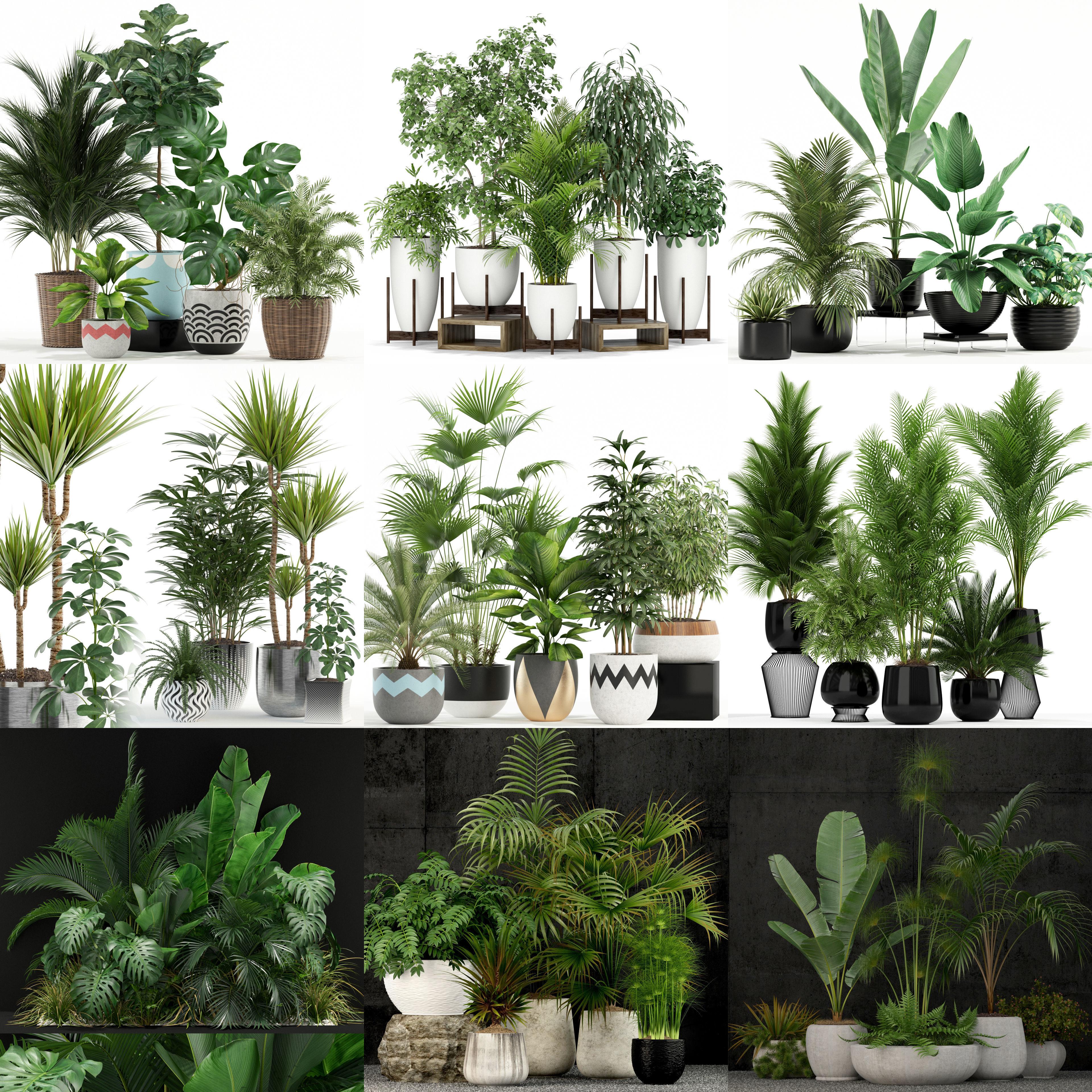 Plants collection vol 02