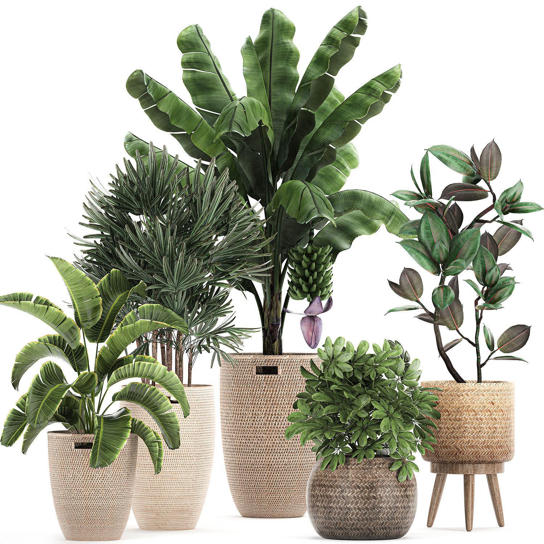 Ornamental plants in a rattan basket 780