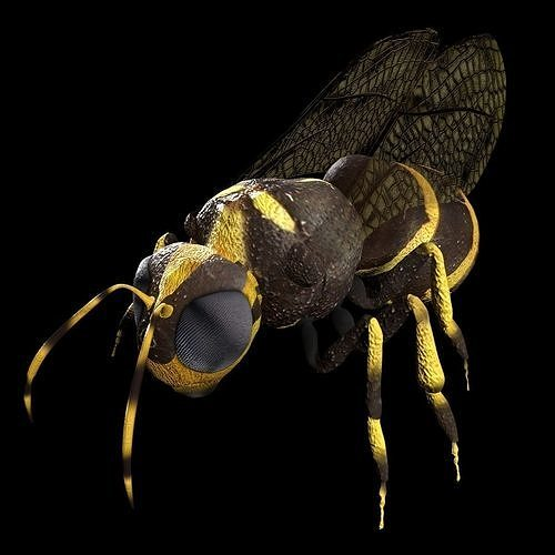 Honeybee Low poly and fully rigged