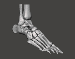 3D model Right Foot - male