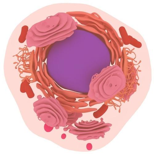 animal cell 3d model max obj mtl fbx 1