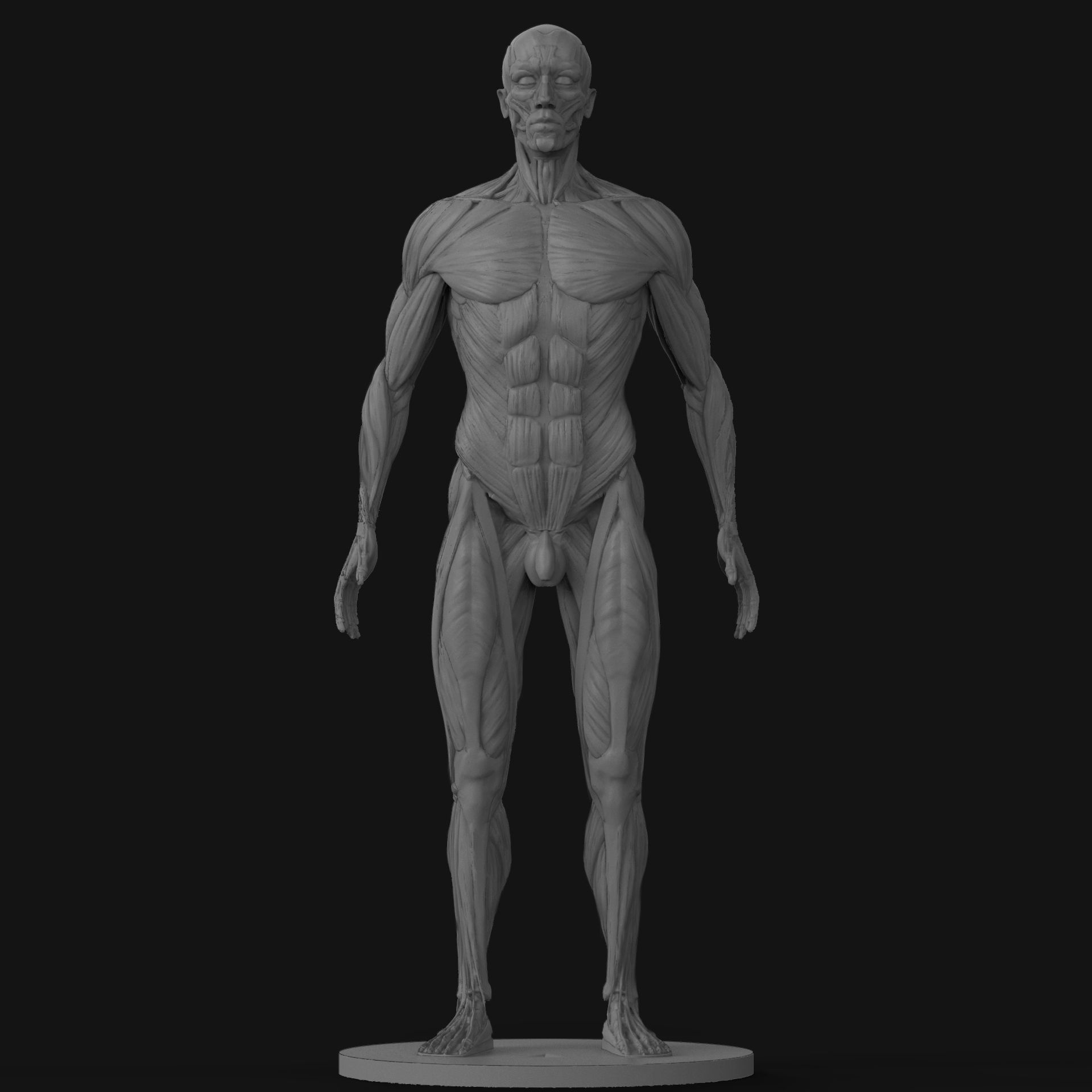 Amazing Male Anatomy Reference Composition - Human Anatomy Images ...