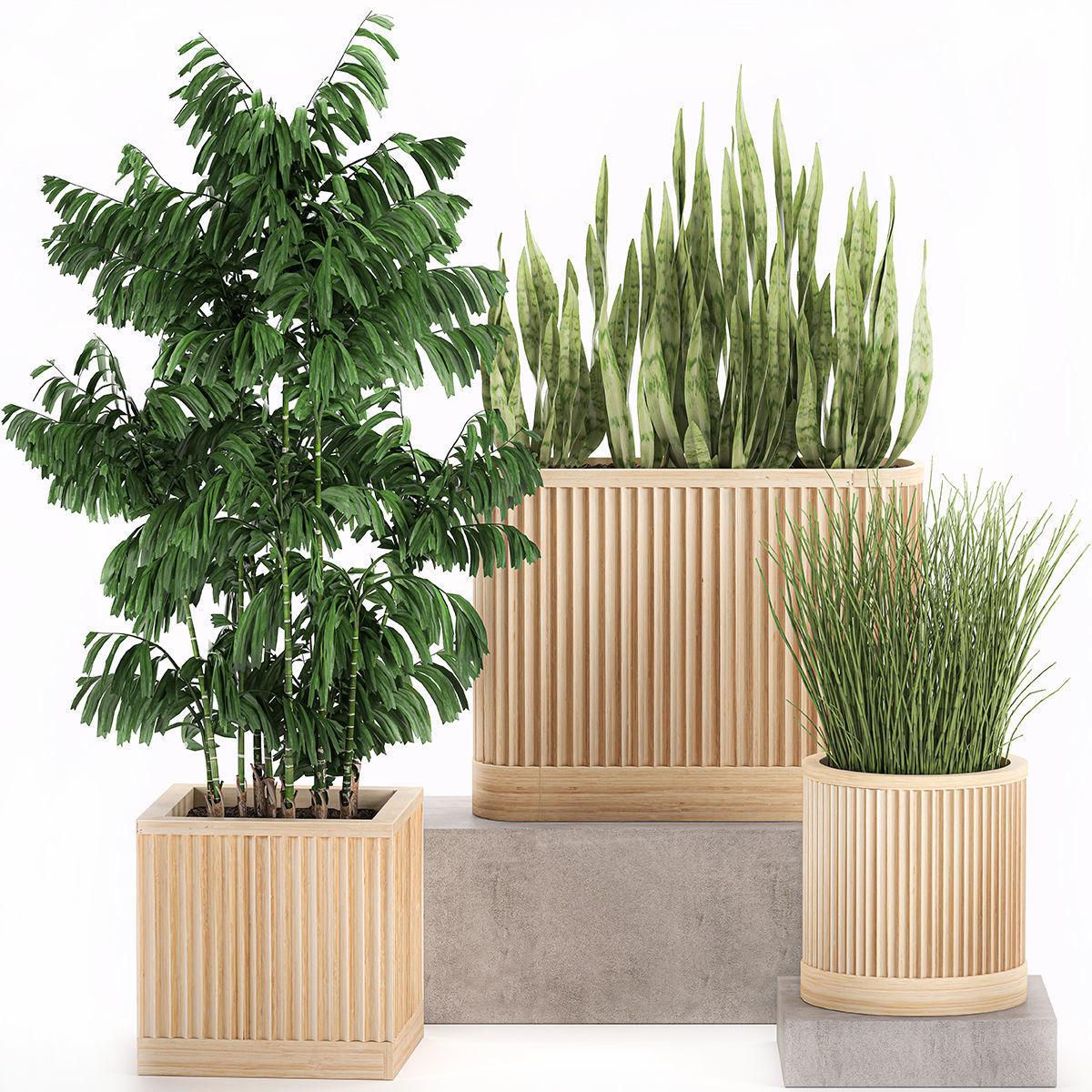 Decorative plants in a bamboo flowerpots 799