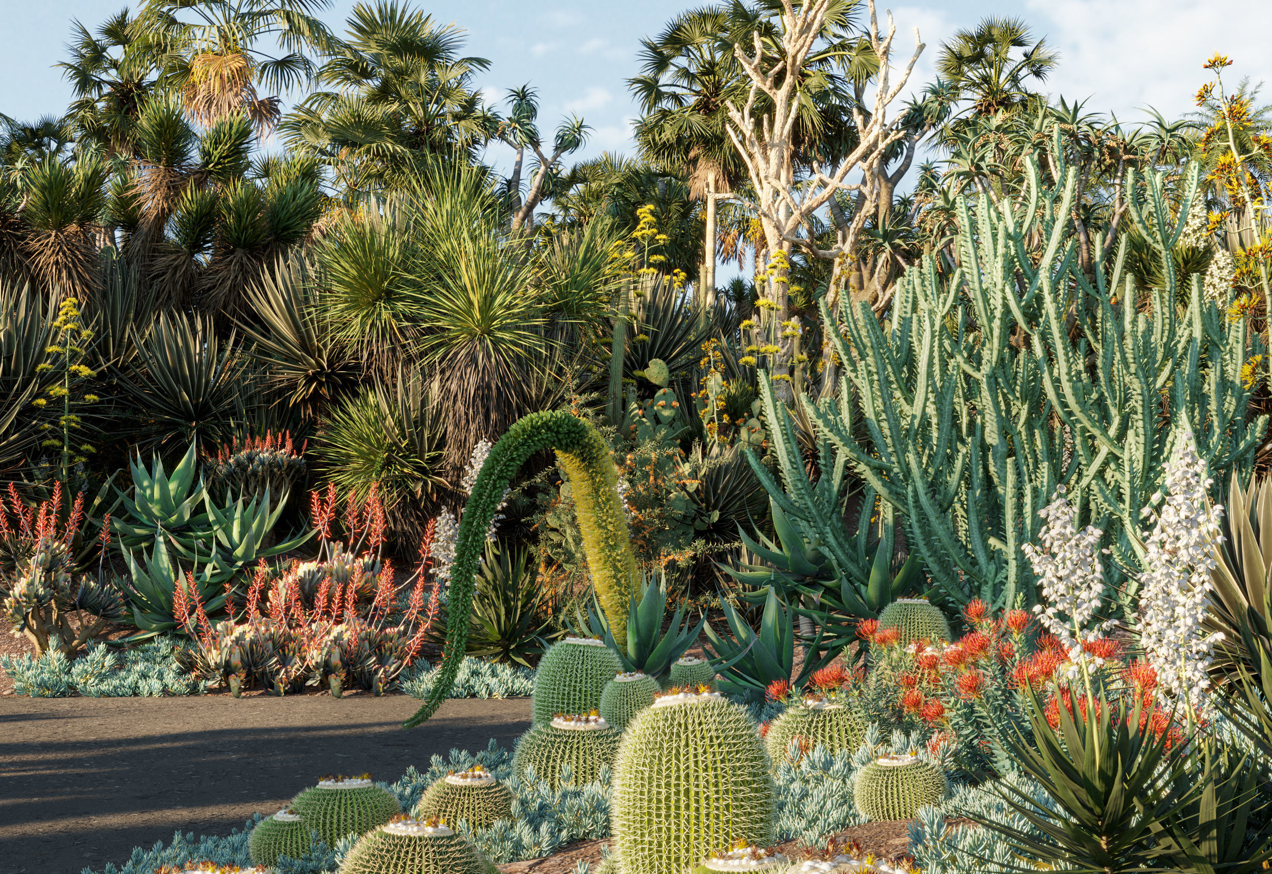 Bundle 12 - Desert Garden