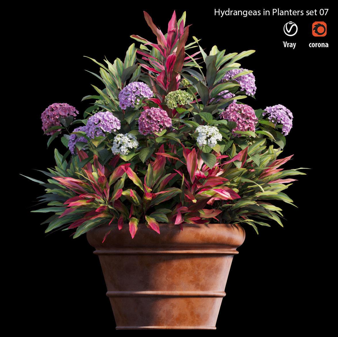 Hydrangea in planters set 07