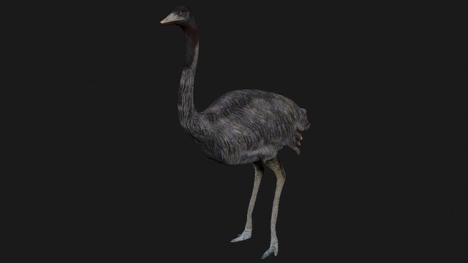 Emu and Ostrich birds