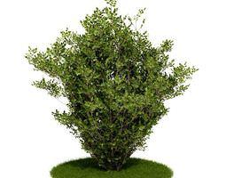 3D Shrub Bush And Grass