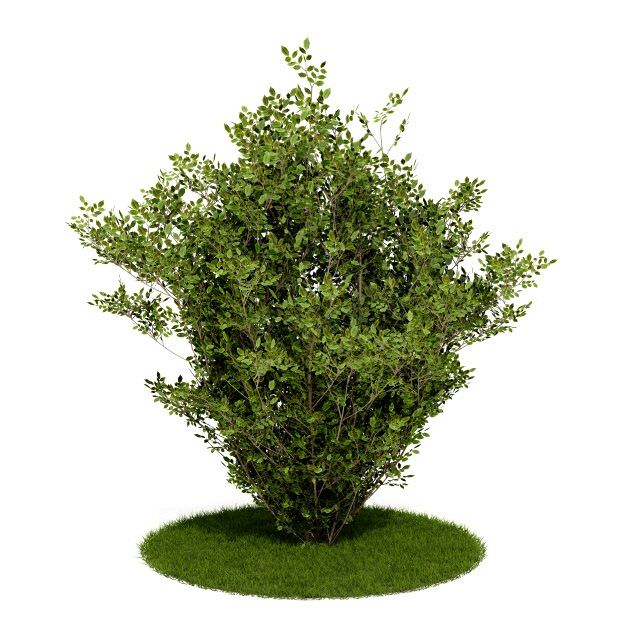 3d Shrub Bush And Grass Cgtrader