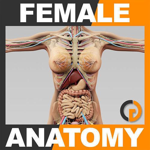 Human Female Anatomy - Body Skeleton Internal Organs