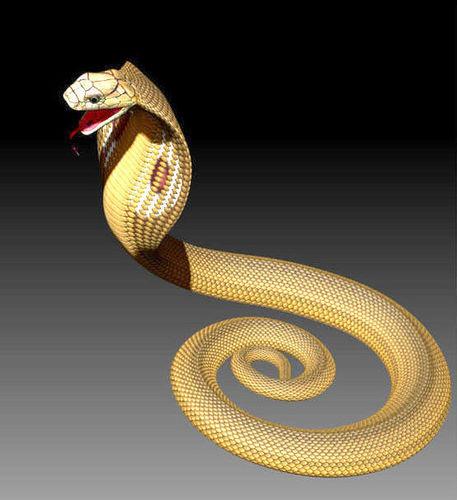 here are ztl snake and skeleton 3d model obj mtl 1