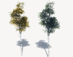 3D asset FREE Birch Trees Sample Model