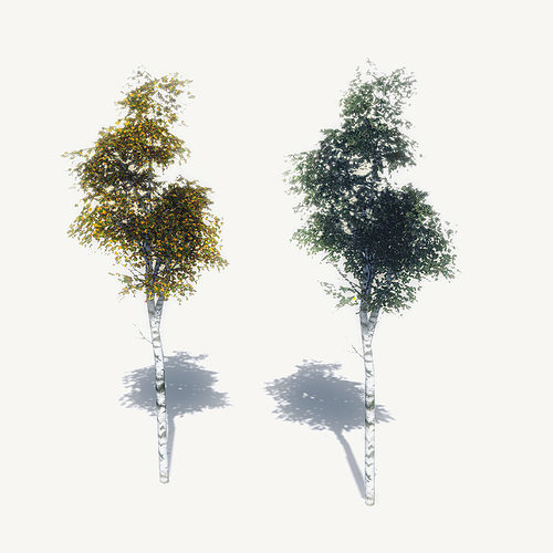 free birch trees sample model 3d model low-poly max obj mtl 3ds fbx dae gmf 1
