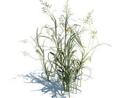 3D model Ornamental Aquatic Grass